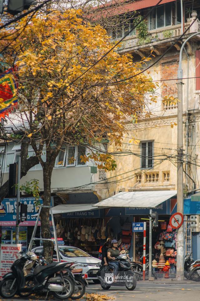 Hà Nội những ngày mùa xuân lá đỏ lá vàng: Đẹp mãi thế này thì khỏi cần đi Hàn hay Nhật luôn nhỉ? - Ảnh 15.