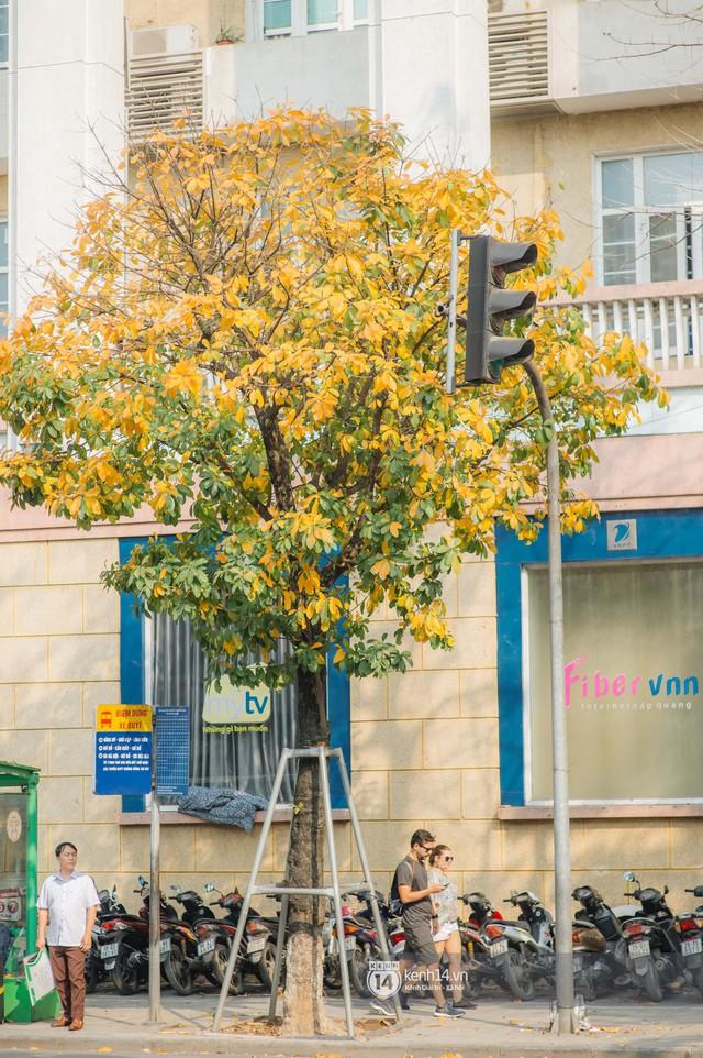 Hà Nội những ngày mùa xuân lá đỏ lá vàng: Đẹp mãi thế này thì khỏi cần đi Hàn hay Nhật luôn nhỉ? - Ảnh 17.