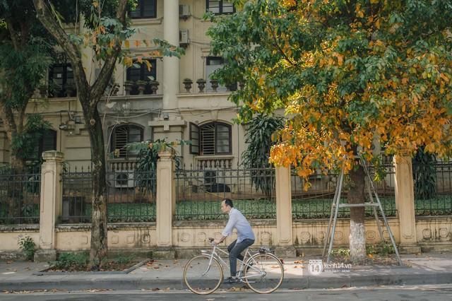 Hà Nội những ngày mùa xuân lá đỏ lá vàng: Đẹp mãi thế này thì khỏi cần đi Hàn hay Nhật luôn nhỉ? - Ảnh 20.