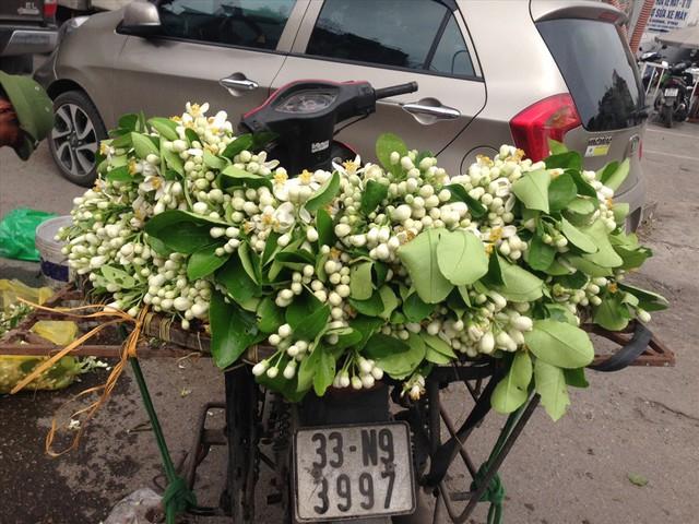 """Rằm tháng Giêng, hoa bưởi được nhiều người săn đón dù giá """"chát"""" - Ảnh 3."""