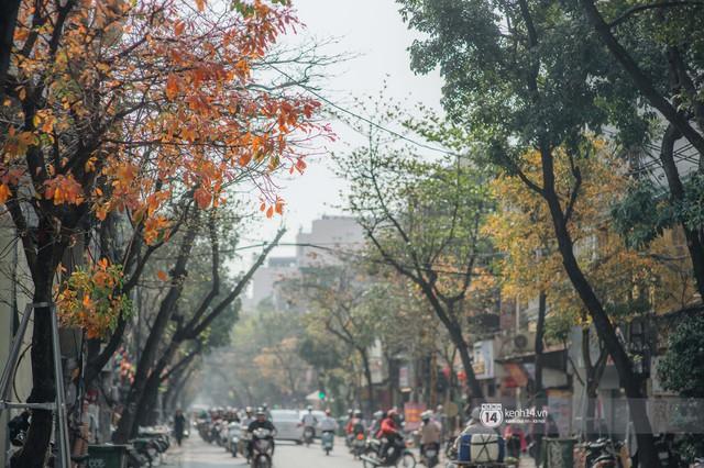 Hà Nội những ngày mùa xuân lá đỏ lá vàng: Đẹp mãi thế này thì khỏi cần đi Hàn hay Nhật luôn nhỉ? - Ảnh 6.