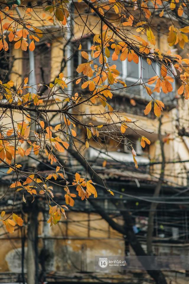 Hà Nội những ngày mùa xuân lá đỏ lá vàng: Đẹp mãi thế này thì khỏi cần đi Hàn hay Nhật luôn nhỉ? - Ảnh 8.