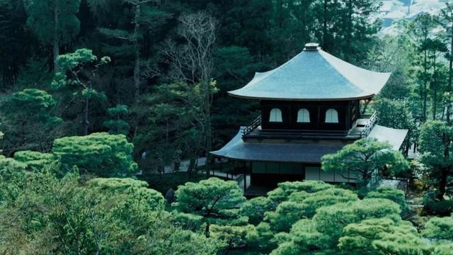 Sau 10 năm ẩn dật, người phụ nữ Nhật Bản trở thành kho báu quốc gia khi được mọi người mệnh danh là bậc thầy cắm hoa - Ảnh 8.