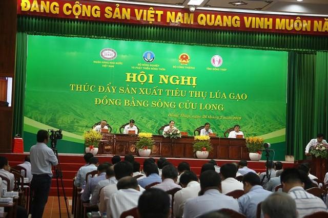 Gạo Việt mang về hơn 3 tỉ đô nhưng bất ngờ lận đận - Ảnh 1.
