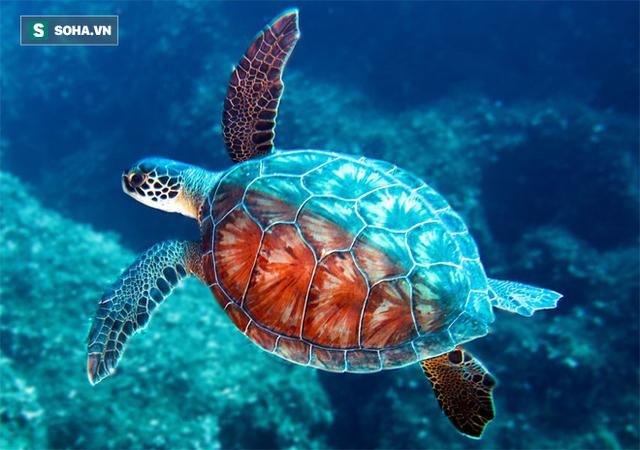 Chuyên gia: 3 đặc điểm giúp rùa trở thành loài sống thọ nhất thế giới mà con người nên học - Ảnh 1.