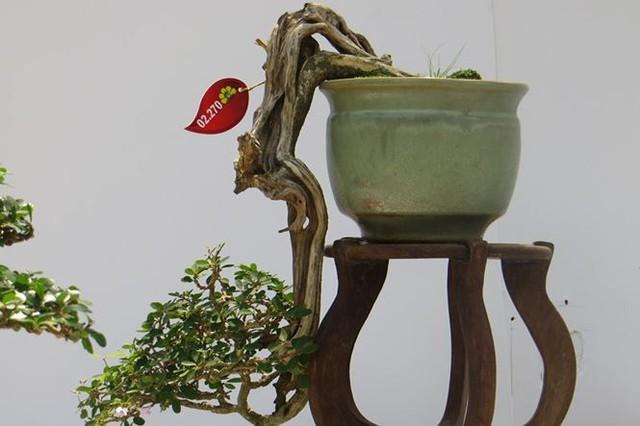 Đi chơi tết, dân Sài Gòn thích thú ngắm kỳ hoa dị thảo - Ảnh 12.