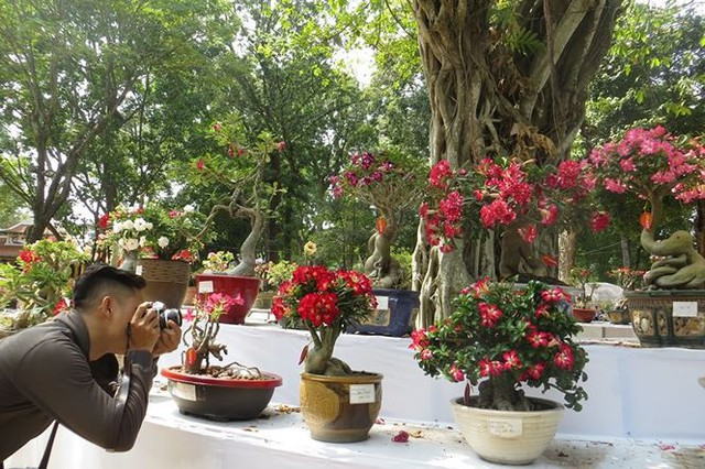 Đi chơi tết, dân Sài Gòn thích thú ngắm kỳ hoa dị thảo - Ảnh 4.