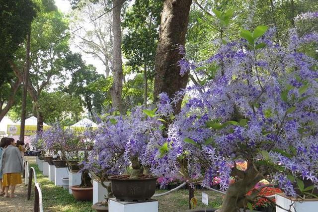 Đi chơi tết, dân Sài Gòn thích thú ngắm kỳ hoa dị thảo - Ảnh 8.