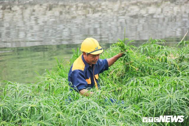 Sau 4 năm thả bè thủy trúc, nước sông Tô Lịch giờ ra sao? - Ảnh 3.