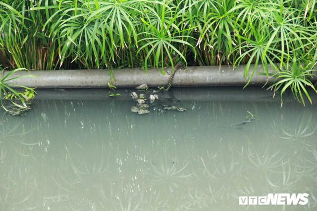 Sau 4 năm thả bè thủy trúc, nước sông Tô Lịch giờ ra sao? - Ảnh 5.