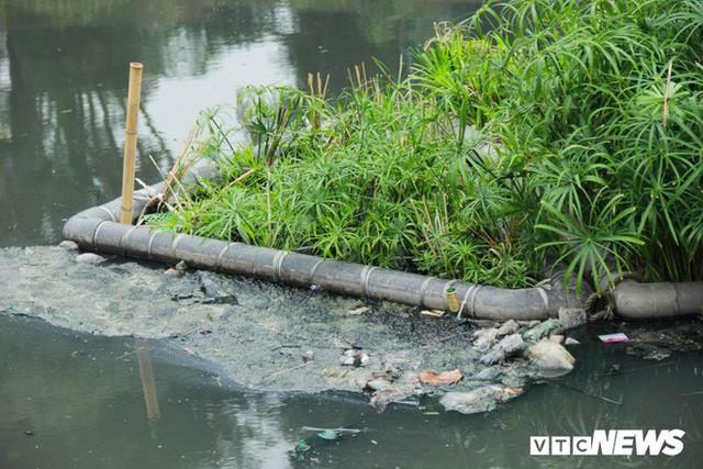 Sau 4 năm thả bè thủy trúc, nước sông Tô Lịch giờ ra sao? - Ảnh 6.
