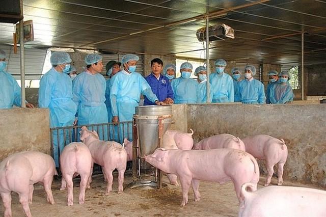 Xuất hiện dịch tả lợn Châu Phi tại Long Biên, Hà Nội dồn lực dập dịch - Ảnh 1.