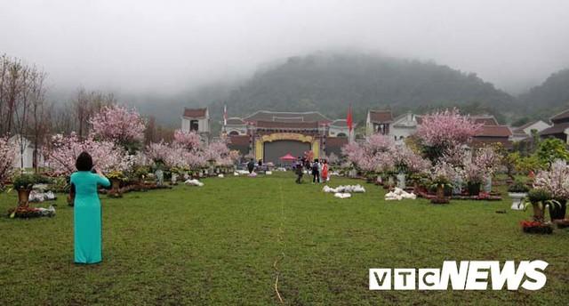 Ảnh: Ngắm hoa anh đào Nhật Bản, mai vàng đua sắc ở non thiêng Yên Tử - Ảnh 19.