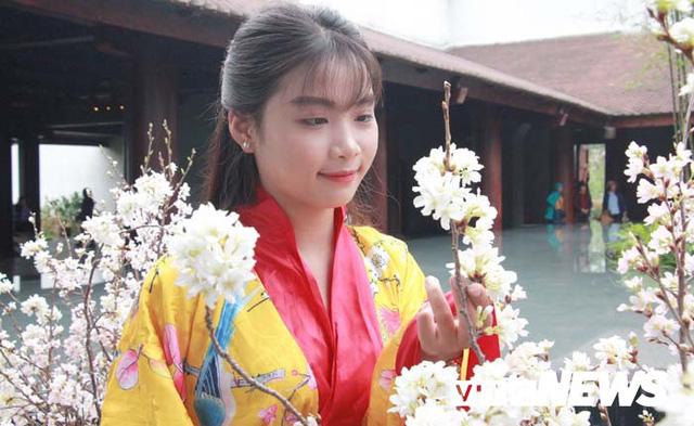 Ảnh: Ngắm hoa anh đào Nhật Bản, mai vàng đua sắc ở non thiêng Yên Tử - Ảnh 7.