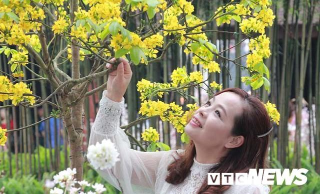 Ảnh: Ngắm hoa anh đào Nhật Bản, mai vàng đua sắc ở non thiêng Yên Tử - Ảnh 9.