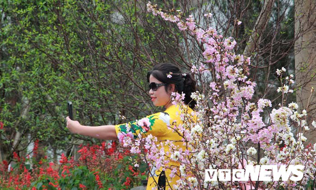 Ảnh: Ngắm hoa anh đào Nhật Bản, mai vàng đua sắc ở non thiêng Yên Tử - Ảnh 10.