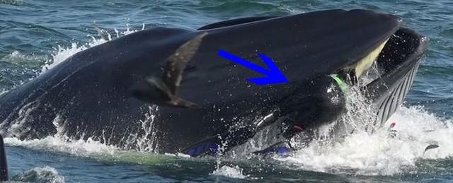 Pinocchio đời thực: Hành trình lọt vào bụng cá voi rồi thoát ra an toàn của nhiếp ảnh gia Nam Phi - Ảnh 1.