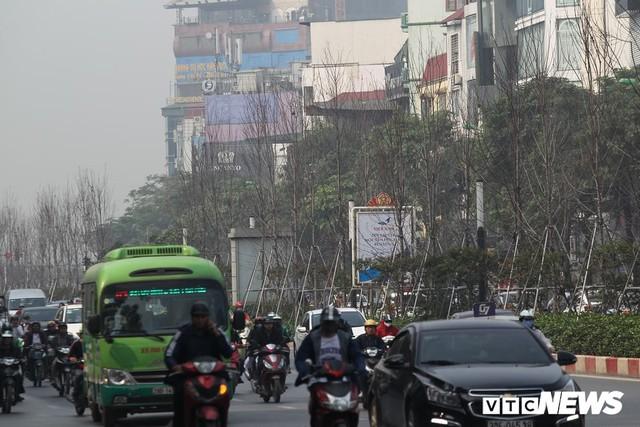 Cận cảnh hàng phong lá đỏ như chết khô khiến Chủ tịch Hà Nội lên tiếng - Ảnh 7.