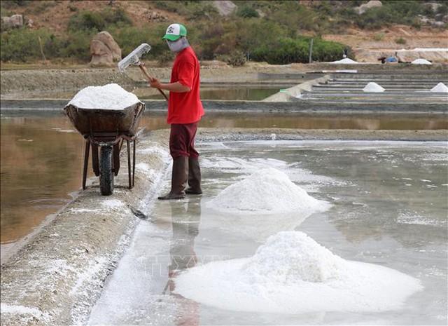Muối được mùa, được giá ở Ninh Thuận - Ảnh 1.