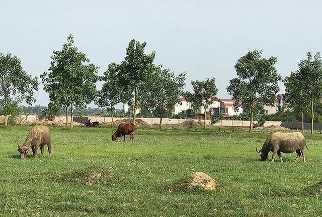 Lệnh kiểm tra 2.000 ha đất dự án đô thị bỏ hoang ở ngoại thành Hà Nội - Ảnh 1.