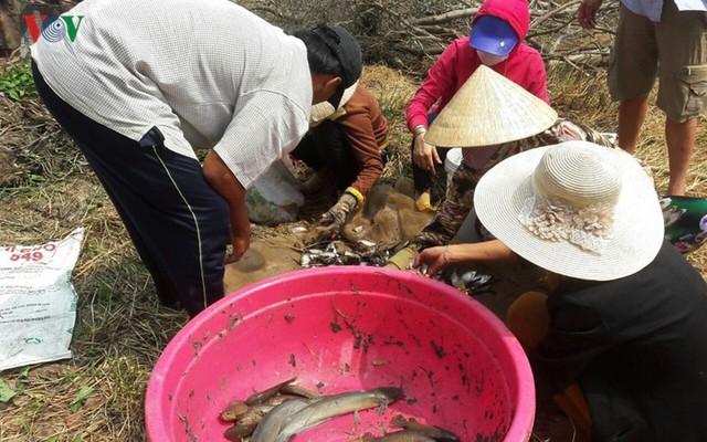 Thu tiền triệu từ cá đồng thiên nhiên nơi Đất Mũi – Cà Mau - Ảnh 3.
