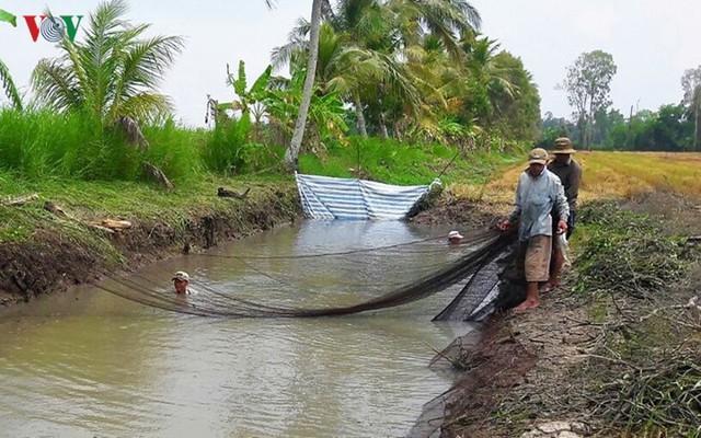Thu tiền triệu từ cá đồng thiên nhiên nơi Đất Mũi – Cà Mau - Ảnh 4.