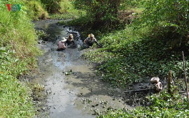 Thu tiền triệu từ cá đồng thiên nhiên nơi Đất Mũi – Cà Mau - Ảnh 5.
