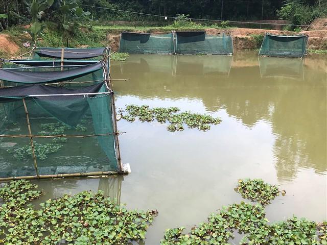 9X dân tộc Thái nuôi hàng ngàn con ếch thu bộn tiền, cả bản ngưỡng mộ - Ảnh 1.