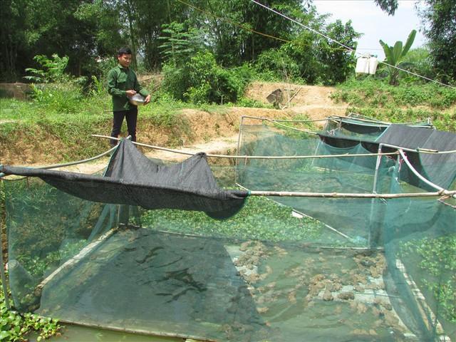 9X dân tộc Thái nuôi hàng ngàn con ếch thu bộn tiền, cả bản ngưỡng mộ - Ảnh 2.