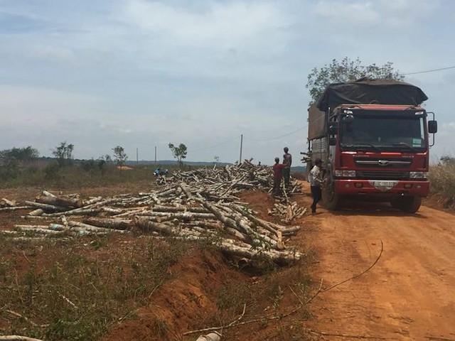 Những vi phạm khiến Ban cán sự đảng UBND tỉnh Đắk Nông bị khiển trách - Ảnh 1.