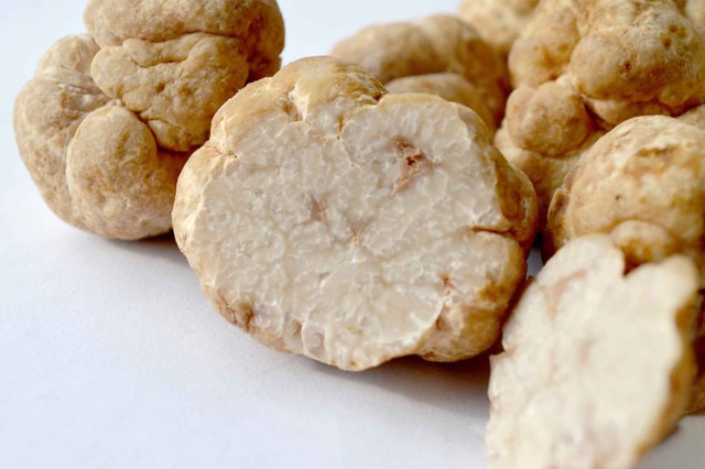 Nấm truffles: nguyên liệu được xưng tụng là thần thánh của các nhà hàng hạng sang, có giá lên đến 1 tỷ cho khoảng 2kg - Ảnh 1.