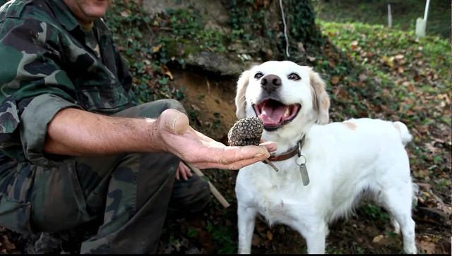 Nấm truffles: nguyên liệu được xưng tụng là thần thánh của các nhà hàng hạng sang, có giá lên đến 1 tỷ cho khoảng 2kg - Ảnh 3.