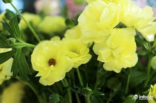Lạ mắt hoa hồng màu nâu đất, mao lương lần đầu bán ở VN dịp 8/3 - Ảnh 4.