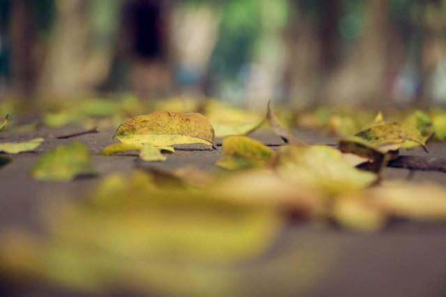 Phố phường Hà Nội đẹp nao lòng mùa lá rụng - Ảnh 10.