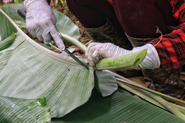 Lá chuối thay nilon, người dân kiếm bạc triệu từ nghề chặt lá chuối - Ảnh 5.