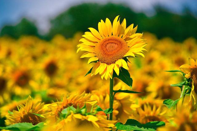 *Dù thế nào cũng hãy sống tử tế: Năng lượng tích cực sẽ giúp bạn luôn gặp chuyện suôn sẻ, kết nối và tạo được lòng tin với mọi người - Ảnh 2.