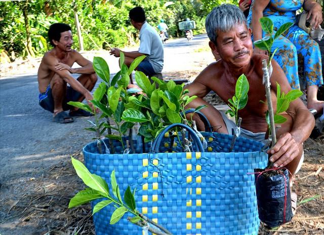 Nông dân trồng mít Thái trên đất lúa: Ồ ạt dễ dẫn đến kết quả thảm bại - Ảnh 8.