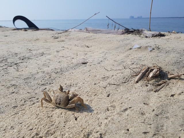 Cận cảnh hòn đảo lạ mới xuất hiện ngoài biển khiến chính quyền Quảng Nam lúng túng - Ảnh 5.