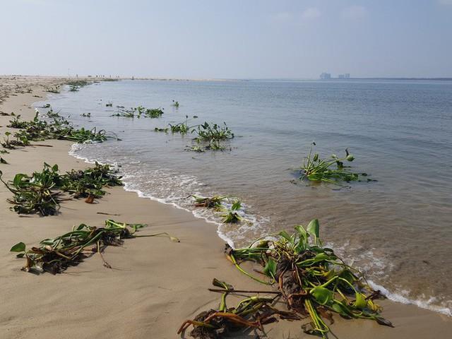 Cận cảnh hòn đảo lạ mới xuất hiện ngoài biển khiến chính quyền Quảng Nam lúng túng - Ảnh 6.