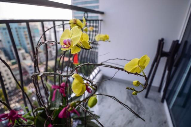 Ngắm 'căn hộ đàn piano' cực độc ở Hà Nội - Ảnh 12.