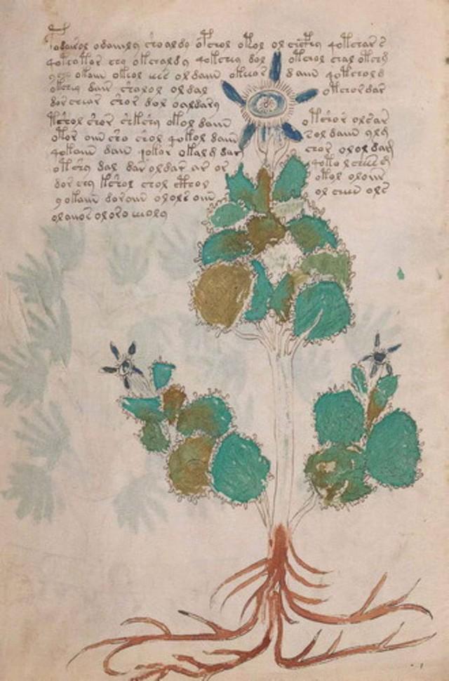 Cuốn sách bí ẩn nhất lịch sử đã hành hạ nhân loại suốt 600 năm, cuối cùng được giải mã trong... 2 tuần - Ảnh 3.