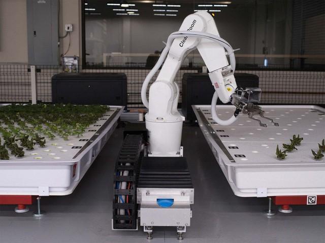 Robot trồng rau đưa cuộc sống viễn tưởng vào đời thực - Ảnh 1.