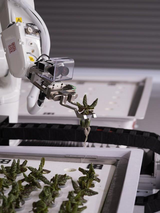Robot trồng rau đưa cuộc sống viễn tưởng vào đời thực - Ảnh 5.