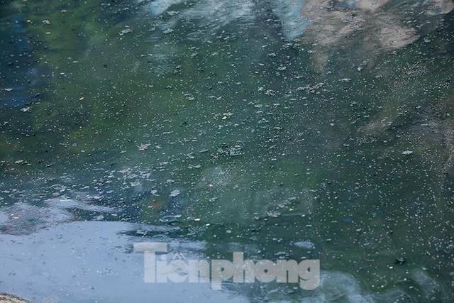 Nước sông Tô Lịch ra sao sau 10 ngày thí điểm bảo bối của Nhật? - Ảnh 6.