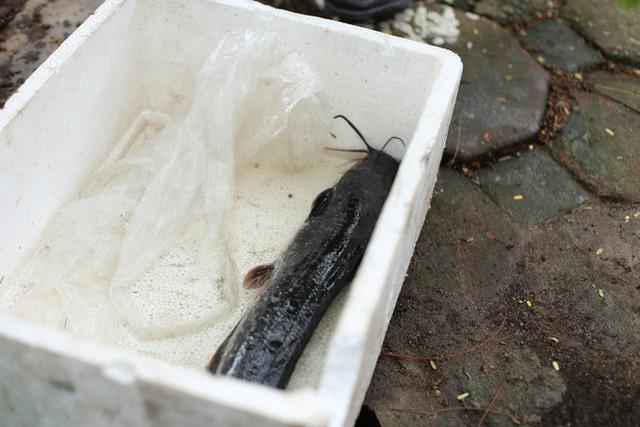 Người dân thư thả ngồi câu cá bên bờ sông Tô Lịch - Ảnh 11.