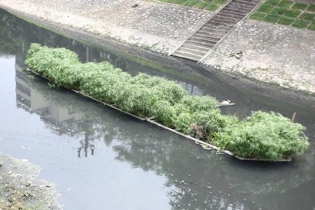 Người dân thư thả ngồi câu cá bên bờ sông Tô Lịch - Ảnh 6.