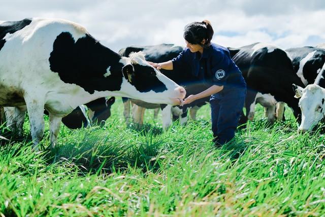 Khám phá trang trại Vinamilk Organic chuẩn châu Âu trên cao nguyên Đà Lạt - Ảnh 3.