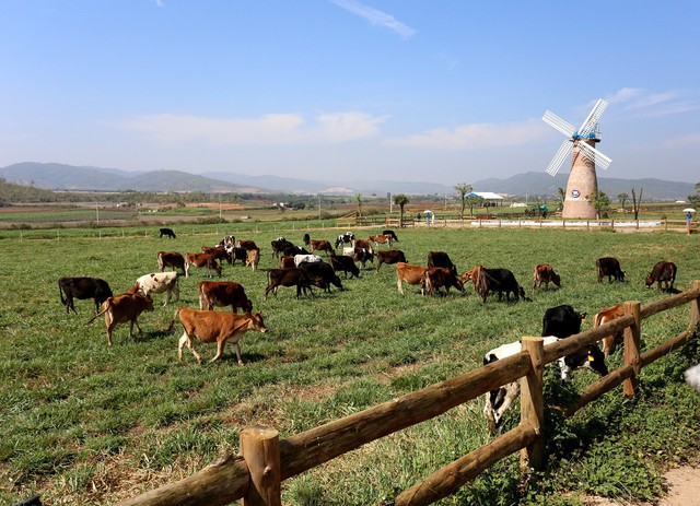 Khám phá trang trại Vinamilk Organic chuẩn châu Âu trên cao nguyên Đà Lạt - Ảnh 4.