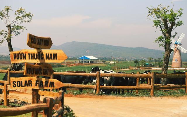 Khám phá trang trại Vinamilk Organic chuẩn châu Âu trên cao nguyên Đà Lạt - Ảnh 11.