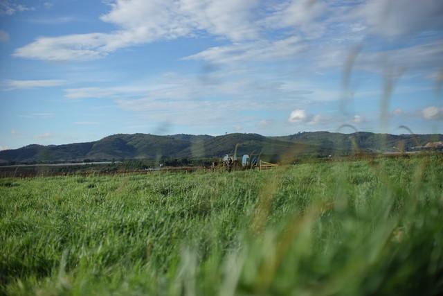 Khám phá trang trại Vinamilk Organic chuẩn châu Âu trên cao nguyên Đà Lạt - Ảnh 8.
